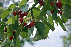 Früchte aus unserem Garten